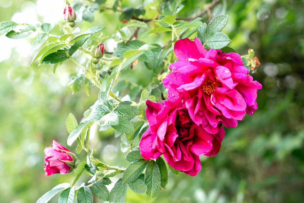 1-fetedesmeres-ideescadeaux-fleurs-lifestyle-ecriture-maroquinerie-papeterie-rennes